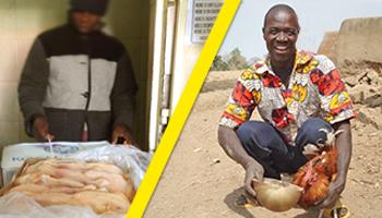 Stop aux exportations de volailles congelées vers l'Afrique !
