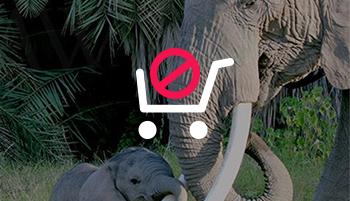 Pétition : Faisons arrêter au plus vite le commerce en ligne des espèces sauvages menacées d'extinction