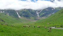 Pétition : Sauvons les vallées de Saux et de La Gela dans les Pyrénées !