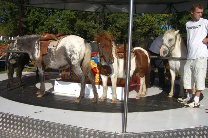 Pour l'interdiction des manèges à chevaux