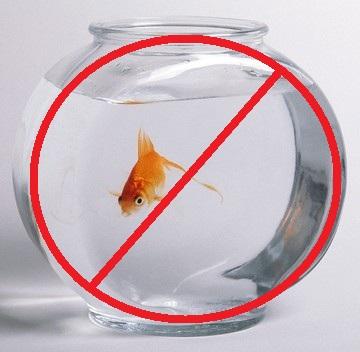 P tition bocal interdit poisson rouge une autre vie for Aquarium vase pour poisson rouge