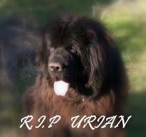 http://www.mesopinions.com/_images/petition/petition-image-bbd7bd538336de89c5bd705074774a6c.pjpeg