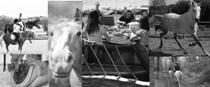 Pétition : Non à la disparition de l'Association de Loisirs Equestre de Rouffiac-Tolosan
