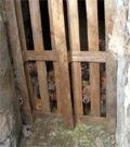Je soutiens l'association Amis des Bêtes dans son combat contre toutes formes de cruauté animale.