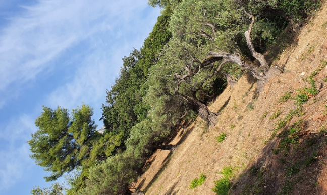Pétition : Association écologique, protection des oliviers centenaires et sauvegarde de vie dans le quartier de la Calade à la Farlède