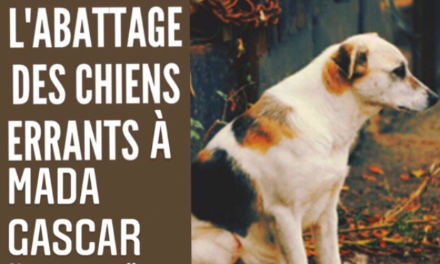 Pétition : Stop à l'extermination des chiens errants à Madagascar