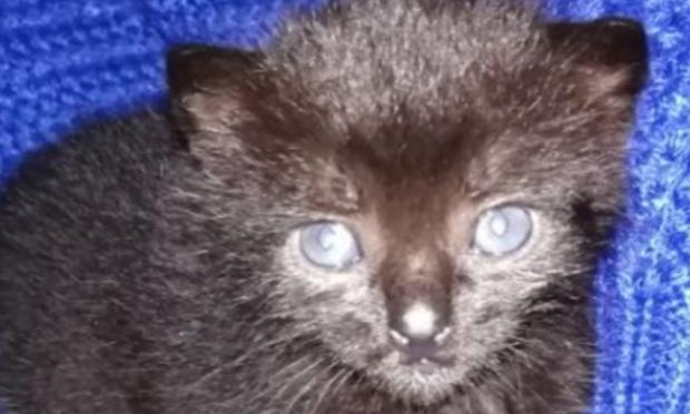 Sauver des chats d'empoisonnement et de maltraitances