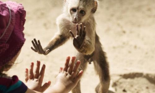 Pétition : Fermer tous les zoos en France