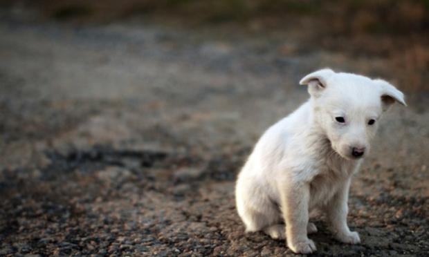 Stop à l'abandon de vos animaux en vacances