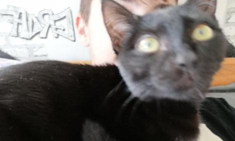 Le chat d'enzo doit arrêter de le maltraiter