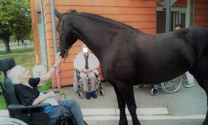 Pétition : Pour que le cheval obtienne le statut d'animal de compagnie et par conséquent ne soit plus destiné aux abattoirs.