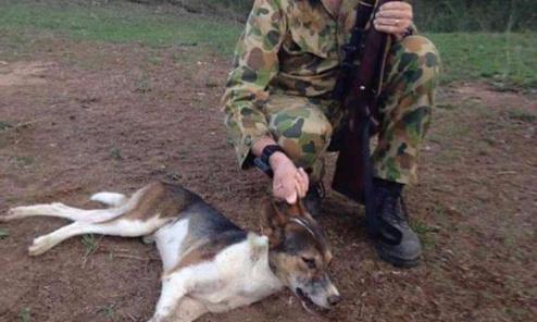 Prison ferme pour l'individu ayant tué à coups de fusil de chasse  2 de ses chiens à Saint- Vran  ( Côtes d' Armor )