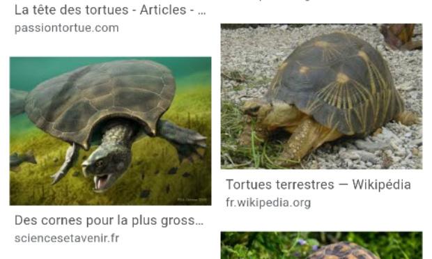 Ne pas capturer et tuer les tortues