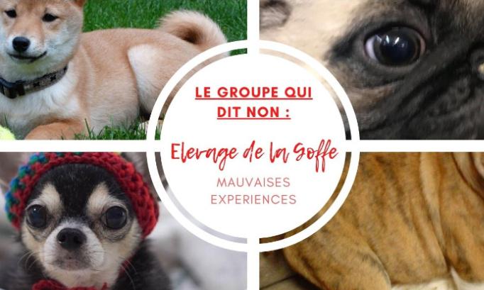 """NON à l'animalerie """"élevage-commerçant"""" du vieux Liège"""