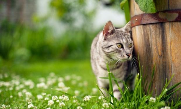 Stopper les disparitions de chats dans le Vaucluse