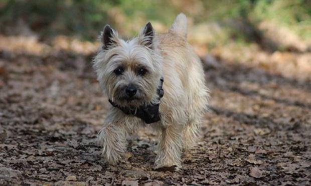 Contre l'obligation des chiens tenus en laisse dans les parcs départementaux
