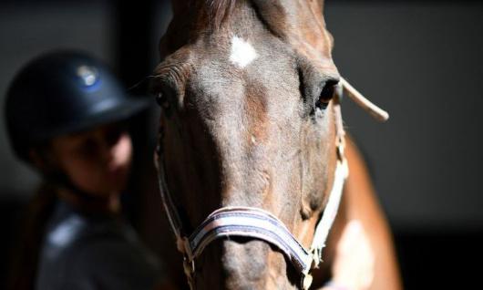 Pétition : Soutien aux 2 propriétaires de chevaux à Rosporden (29)