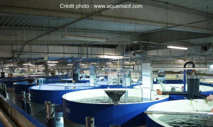 Pétition : Non aux projets d'élevages de poissons dans le Boulonnais