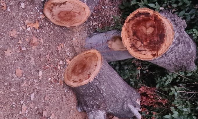 Pétition : Arrêtez de couper les arbres à Aix-en-Provence.