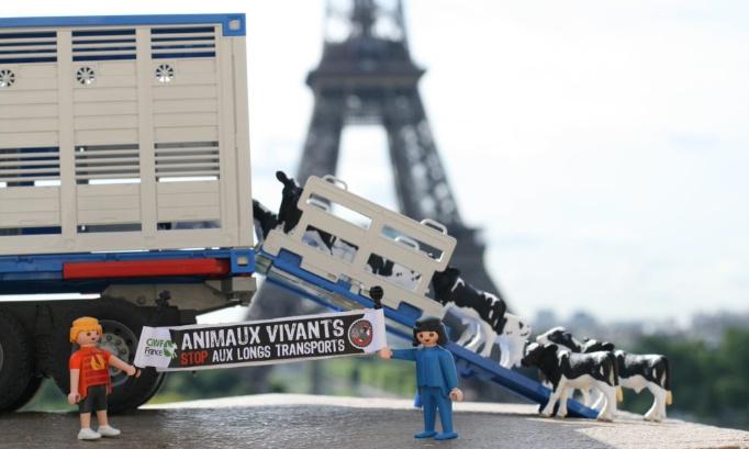 LES EXPORTATIONS D'ANIMAUX VIVANTS HORS DE L'UE DOIVENT CESSER