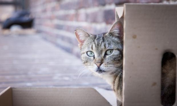 Pétition : Sauvons les chats errants et libres