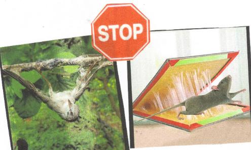 Stop à la barbarie ! Pour l'interdiction de tous les pièges à la glu quelles que soient les espèces concernées !