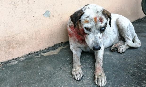 Non à la cruauté animale