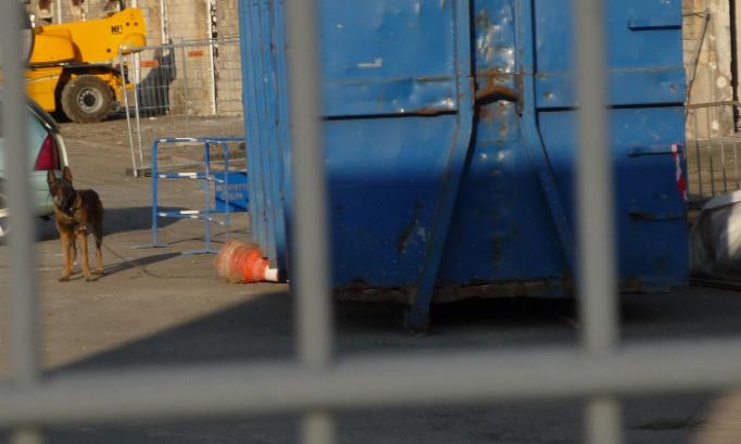 Chiens de l'ombre. Interdiction et sanction de la maltraitance sur les chiens de travail.