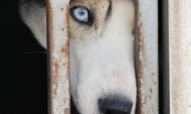 Aidons Astrid Antoine à récupérer ses chiens !!!!