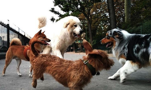 Pétition : Parc canin à Tours pour une meilleure cohabitation