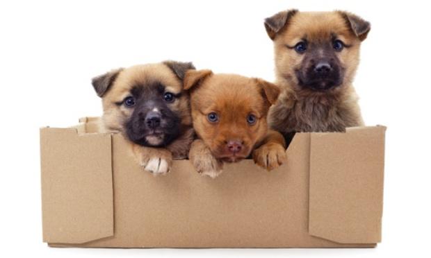 Pétition : Interdire le don et la vente d'animaux sur Le Bon Coin
