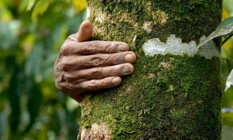 Pétition : Signez pour dénoncer les accaparements de terres des paysans indonésiens !