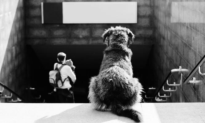 Pour la déclaration obligatoire de naissance de tous chiens et chats avec contrôle par vétérinaire