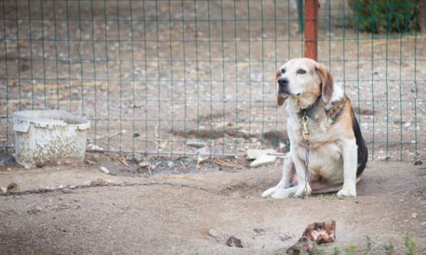 """Stopper les """"buzz"""" sur les cruautés envers les animaux"""