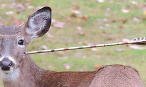 Réforme de la chasse