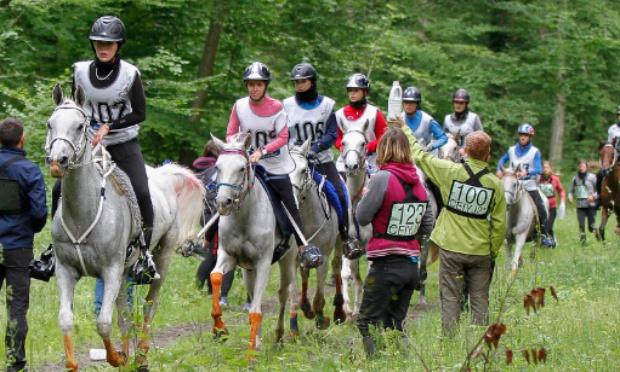 STOP à la dictature de la FEI en Endurance Equestre !/Stop the dictatorship of the FEI in endurance riding !