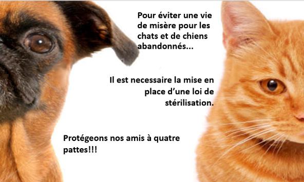 Pétition : Loi pour la stérilisation des chats et chiens abandonnés : un acte de protection