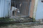 Pétition : Pour la création d'une fourrière digne et d'un refuge à Brest