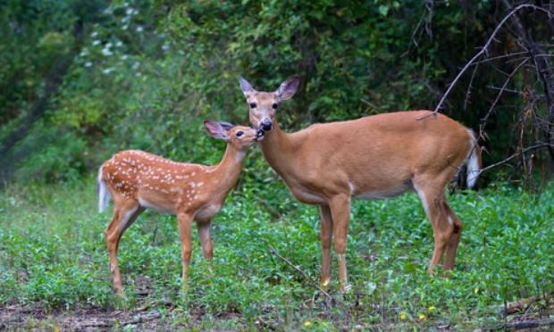 Pétition : Demandons à Decathlon de retirer son rayon chasse car la chasse n'est pas un sport ni un loisir mais une tuerie d'animaux