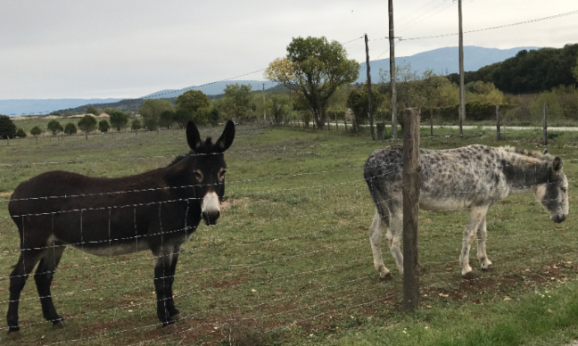 Pétition : AU SECOURS nos ânes de Chatuzange-le-Goubet. STOP à l'extension de la décharge à poubelles ONYX-VEOLIA (26) !