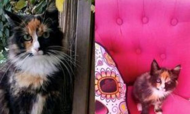Stop au massacre des chats dus aux chiens en divagation à Alba Serena