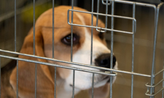 Pétition : Expérimentation animale : pour que la loi soit enfin appliquée !