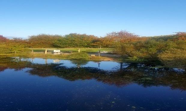Pétition : Protection des arbres du parc de la Sèvre à Vertou