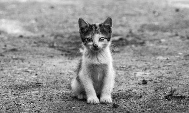 Pour la stérilisation des chats du village