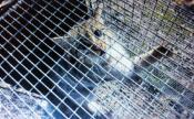 Pétition : STOP à la Fédération de la Chasse du 70 et à cette honteuse destruction d'espèces protégées en bande organisée à Noroy-le-Bourg !