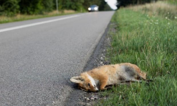 Aménagement de la route pour ne plus écraser d'animaux