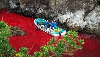 Stop the slaughter in Taiji
