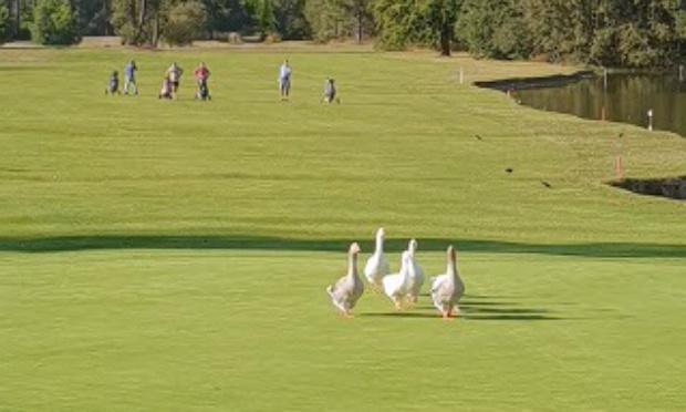 Pour la réouverture des golfs