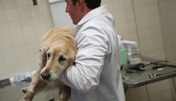 Pétition : Demandons au Téléthon de ne plus pratiquer l'expérimentation animale !