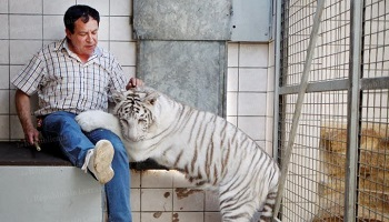 Pétition : Non au spectacle de tigres Tiger World